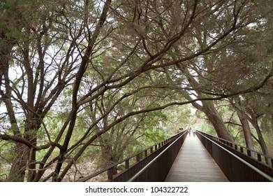 Wooden boardwalk and tree avenue in Kings Park, Perth, Australia