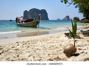 Wooden boats on the beach shore , surrounded by clear water, some trees at the side, a small island at the back and a coconut in the sand