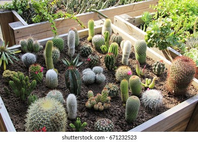 Wooden box filled with cacti