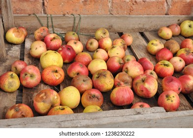 Wooden box of windfall apples