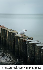 Wooden breakwater on the background of the Baltic Sea. Seagulls - Shutterstock ID 1884838552