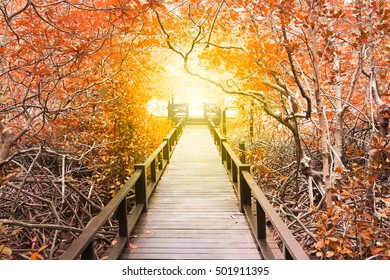 The wooden bridge among beautiful orange trees to the sun light in the end of way