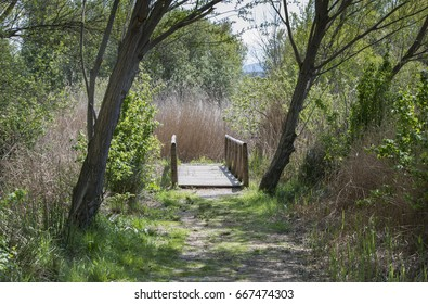 wooden bridge  in background of forest in spain andalusia in spring