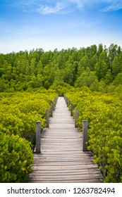 The wooden bridge, boardwalk, wooden walkway for nature trail the mangrove forest and the coast with blue sky at Tung Prong Thong or Golden Mangrove Field, Rayong, Thailand