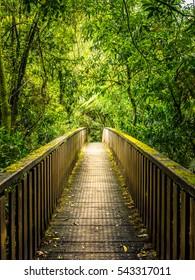 Wooden Bridge in Deep Forest, Walkway to Aranui Cave in Waitomo, New Zealand.