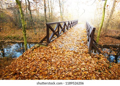 Wooden bridge in the forest in the autumn