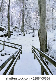 A wooden bridge in a forest covered by snow. Winter landscape in Larvik, Norway.