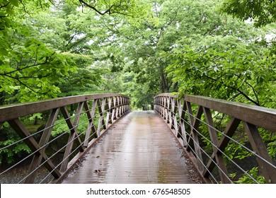 wooden bridge in green forest