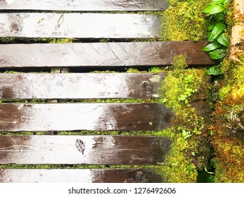 Wooden bridge with green mos