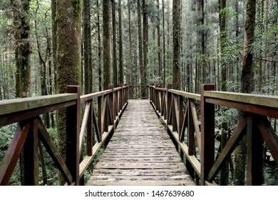 The wooden bridge with handrail in the deep forest across through many straight trees with a kind of mysterious atmosphere.
