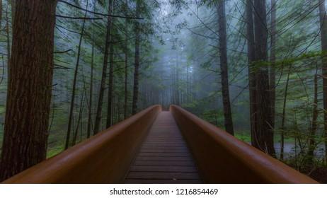 Wooden bridge. Lady Bird Johnson Grove trail, Redwoods National Park