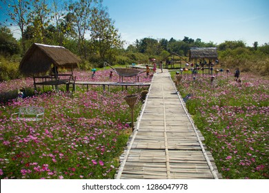 Wooden bridge and Mexican Aster,Mexican Aster in the field,Sulfur Cosmos,Sulfur Cosmos in the garden