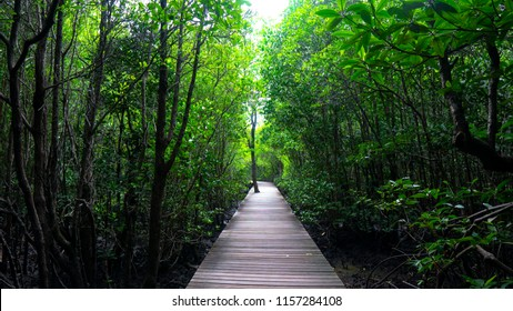 Wooden bridge natural trail at Kung Krabaen Bay Royal Development Study Center in Chanthaburi. The center was founded for studying and researching the natural ecosystem.