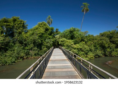 The wooden bridge over the river. View of the empty boardwalk into the green jungle in Iguazu national park in Misiones, Argentina.