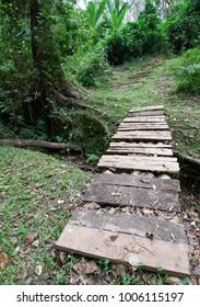 Wooden bridge over a small stream in Kakamega forest, Kenya