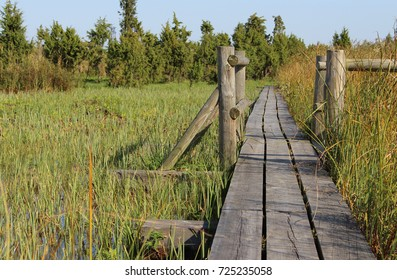 Wooden bridge over swamp surrounded by reeds