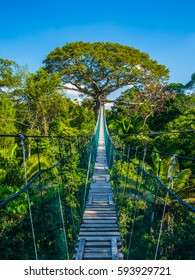A wooden bridge, the path to the top of a tree in the Amazonian jungle of Peru