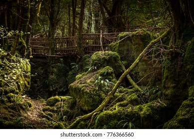 Wooden bridge in Puzzlewood, forest of Dean.