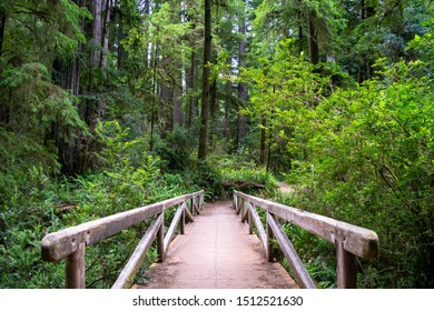 Wooden Bridge in Redwood Forest of Northern California - Jedediah Smith Redwoods State Park, California, USA