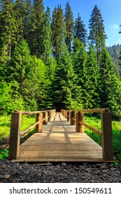 wooden bridge stretching into the depths of the forest vertical