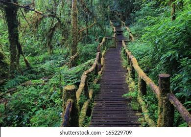 Holzbrücke auf tropischem Regenwald