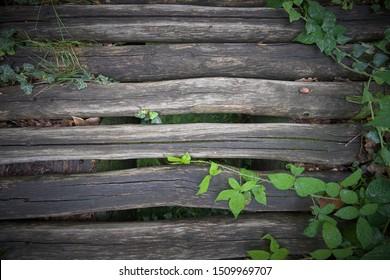 A wooden bridge in the woods