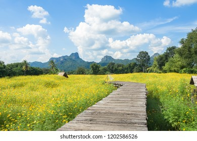 wooden bridge in a yellow cosmos flower field with bluesky
