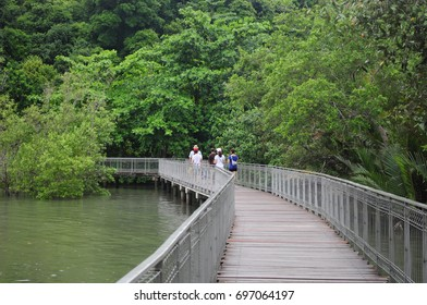 wooden bridgeway into the river with green background
