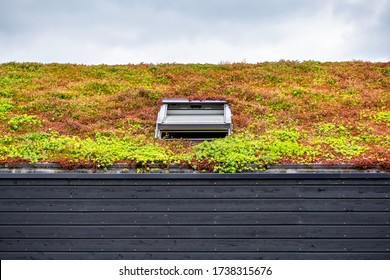 Wooden building with a green roof completely covered with vegetation. Extensive green sustainable sedum cassette roof with succulent plants. Roof greening with succulents. Skylight in the middle