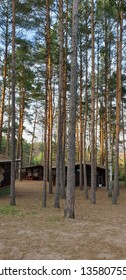 Wooden cabins in the woods