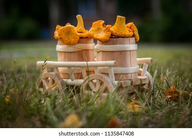 A wooden cart with  fresh mushrooms in the forest, closeup. Raw wild mushrooms chanterelles. Vegetarian food. Selective focus