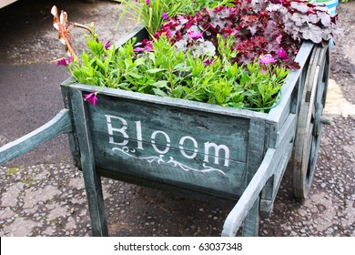 Wooden cart with plants