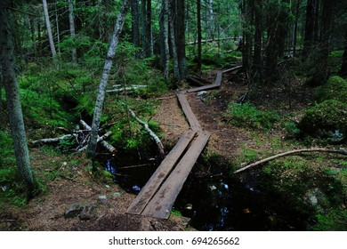 A wooden causeway hiking trail over a stream leading to a dark green forest in Nuuksio /Noux national park in Espoo Finland