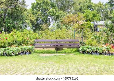 wooden chair in the garden