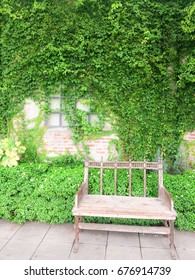 Wooden chair is located in front of the brick wall with green foliage covered.