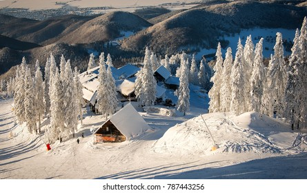 Wooden chalets and spectacular ski slopes in the Carpathians,Poiana Brasov ski resort,Transylvania,Romania,Europe,Pine forest covered in snow on winter season