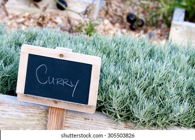 Wooden chalkboard sign identifying the garden herb Curry in a small planter box.