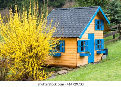 wooden children playhouse with blue windows and black roof in front yellow blooming forsythia in backyard spring garden after rain