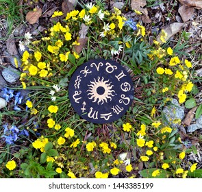 Wooden circle with zodiac signs chart in flowers. Wicca, esoteric, divination and occult concept with magic objects for mystic rituals, Halloween, Beltane background