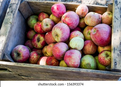 Wooden Crate of Apples