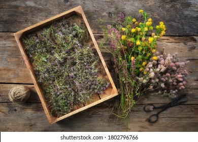 Wooden crate filled with dry healthy thyme flowers, scissors and fresh medicinal plants on wooden table. Alternative medicine. Top view. Flat lay.