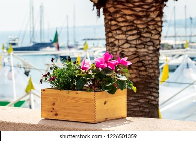 A wooden crate used as a planter on the background of the city's sea.