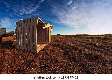A wooden crate waiting for potatoes on the autumn fields of the rural Finland. It's harvest time and the fields are full of tractors and crates.