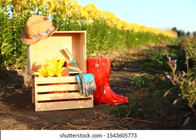 Wooden crates, fresh lilies and gardening tools at flower field. Space for text
