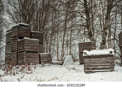 Wooden crates piled by the birch trees at the Northern Finland. These crates are typically used for storing potatoes. These ones have been left by the birch trees for the winter.