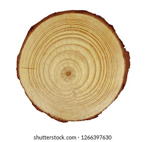 Wooden cross section of trunk isolated on white background with Clipping Path