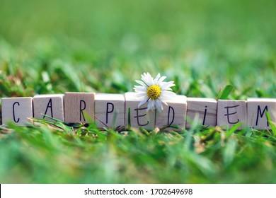 Wooden cubes with the words Carpe Diem, meaning seize the day, in green bright grass and a white daisy, summer background