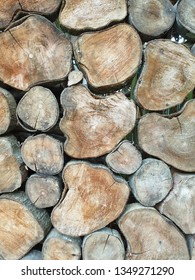 Wooden cut texture, tree rings