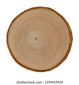 Wooden cut of a tree isolated on white background. Ashen tree cross section.