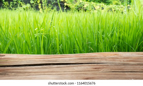 Wooden deck with beautiful color rice field.